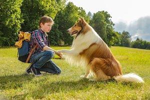 Bilete la  Lassie hazater (Lassie: Eine Abenteurliche Reise)